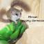 African pygmy dormouse thumbnail 1