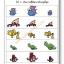 แบบฝึกทักษะการสังเกตและเรียงลำดับ อันไหนใหญ่สุด (ระดับ อ. 1 ขึ้นไป) thumbnail 6