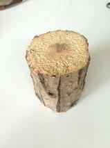ท่อนไม้ผุ ขนาด XL (เส้นผ่านศูนย์กลาง 12+ ซม.) ไม้ผุชุดนี้มีความผุมากเป็นพิเศษ มีจำนวนจำกัด