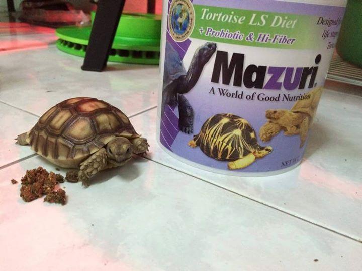 อาหารเต่าบก อาหารเสริมเต่าบก มาซูริ Mazuri