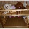 เตียงนอน 2 ชั้นสำหรับสุนัข