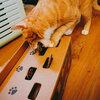 กล่องหลอกแมว CAT PUNCH