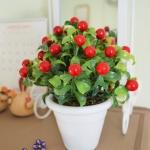 Red Berry In Flowerpot ต้นเบอร์รี่ในกระถาง