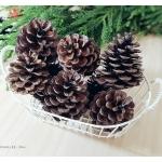 Pinecone ลูกสนธรรมชาติ