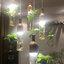 โคมไฟระย้าสำหรับปลุกต้นไม้ thumbnail 2