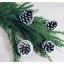Snow Pinecone ลูกสนธรรมชาติ สีน้ำตาลเข้ม แต้มขอบปีกด้วยสีขาว thumbnail 10