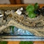 ตู้ปลาอโรมา thumbnail 1