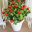 Red Berry In Flowerpot ต้นเบอร์รี่ในกระถาง thumbnail 4