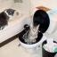 ชุดฝึกแมวนั่งถ่ายบนโถส้วม CitiKitty thumbnail 2