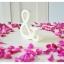 Shredded Wheat - สัญลักษณ์ & (Ampersand) ตั้งโต๊ะ งานไม้สัก โทนสีครีม thumbnail 3