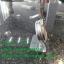 Oven Thermoneter ,เทอร์มอมิเตอร์วัดเตาอบ 008-FT-0301 thumbnail 3