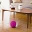 หุ่นทำความสะอาดพื้นและของเล่นสุนัขและแมว MOCORO thumbnail 4