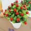 Red Berry In Flowerpot ต้นเบอร์รี่ในกระถาง thumbnail 2