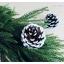 Snow Pinecone ลูกสนธรรมชาติ สีน้ำตาลเข้ม แต้มขอบปีกด้วยสีขาว thumbnail 9
