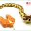 งูบังคับวิทยุ thumbnail 4