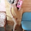 Slimming Leggings by Angel Bra Bra เลคกิ้ง ขาเรียว สวยมั่นใจ ทุกสไตล์การแต่งตัว thumbnail 10
