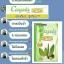 Congasia DETOX by ABJ คองกาเซีย ดีท็อกซ์ น้ำหนักลด หน้าใส ลำไส้สะอาด thumbnail 21