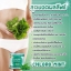 Chloro Mint Chlorophyll คลอโรมิ้นต์ คลอโรฟิลล์ หุ่นเพรียว ลดพุง ผิวใส ขับถ่ายง่าย thumbnail 16