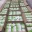 ผลิตภัณฑ์เสริมอาหาร เลอลิต้า Lerlita Chlorophyllin By Nongnaka thumbnail 4