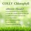 Colly Chlorophyll Plus Fiber คอลลี่ คลอโรฟิลล์ พลัส ไฟเบอร์ คลอโรฟิลล์รสชาเขียว thumbnail 3