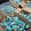 ยาสีฟันสมุนไพร ฟันสวย บายโภคา HERBAL WHITENING TOOTHPASTE by Phoca thumbnail 13