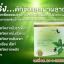 Rajana ราจาน่า ผลิตภันฑ์เสริมอาหาร สารสกัดจากธรรมชาติ หุ่นดี ทันใจ ผอมไว ไม่โยโย่ thumbnail 5