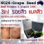 NC24 Concentrated Grape Seed and Vitamin C Liquid 100% เซรั่มเมล็ดองุ่น และ วิตามินซี หมดปัญหาหน้าสิว ผิวขาวใส อมชมพู thumbnail 8