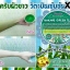 WAKAME GREEN TEA BODY SCRUB by Paradise สครับสาหร่ายวากาเมะชาเขียวขัดผิว สูตรขาวเร็ว X2 thumbnail 6